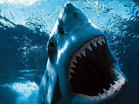 Canal 22 presenta Semana de los grandes escualos: ¡Tiburón!