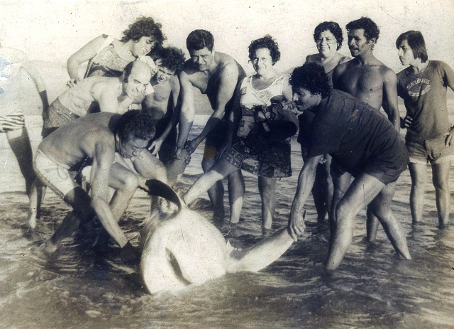 Caceria de Tiburo¦ün