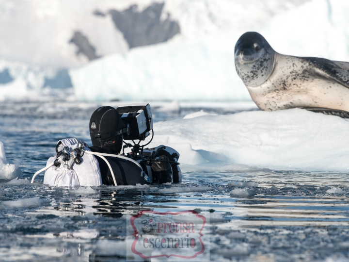 Picture Shows: Behind the scenes. Leopard seals are 3 metres long, and have an enormous mouth relative to their body size. They are extremely powerful and agile swimmers, but amazingly none of this deterred cameraman Hugh Miller from getting in the water to film them!