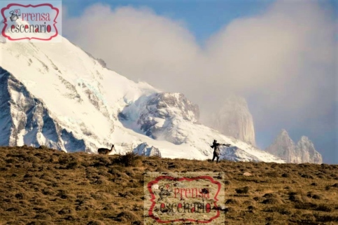 Picture Shows: Behind the scenes. Cameraman John Shier carries over 30kg of camera gear on his shoulder as he scouts Torres del Paine National Park, Chile, in search of puma. Perhaps thinking John makes a good decoy, a curious guanaco, the puma's main prey, follows behind him.
