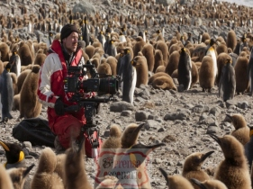 Picture Shows: Screen grab. Cameraman Rolf Steinmann filming king penguin chicks on South Georgia.