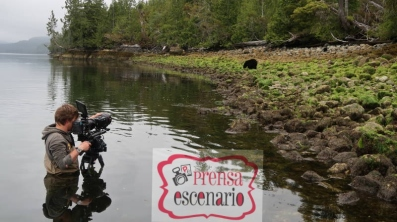 Picture Shows: Behind the scenes. Cameraman Bertie Gregory films black bears feeding on the coast of British Colombia, Canada. Bears are undisturbed by objects in the water so Bertie stands in waders without moving for hours on end to capture the bear's unique crab-eating technique.