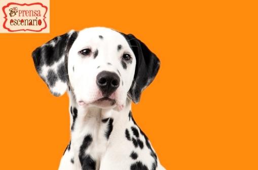 animal planet - dog tv - semana felicida0001