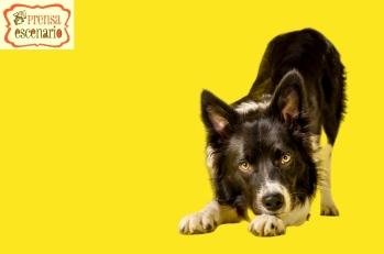 animal planet - dog tv - semana felicida0002