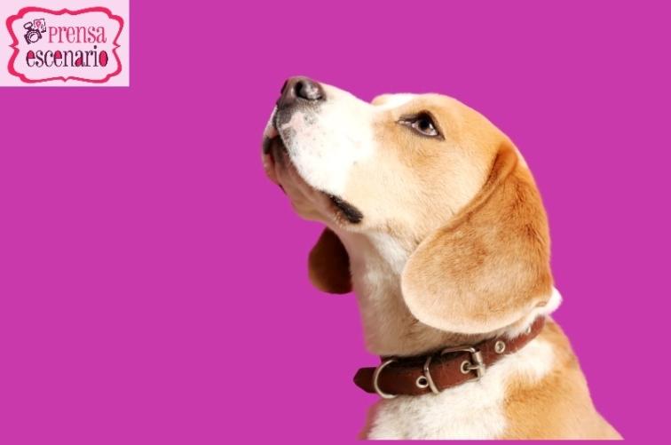 animal planet - dog tv - semana felicida0003