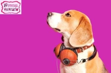 animal planet - dog tv - semana felicida0004