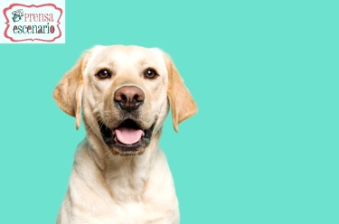 animal planet - dog tv - semana felicida0005