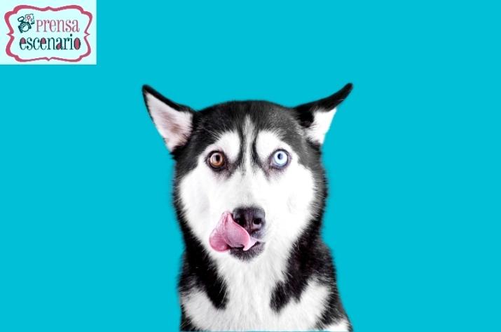animal planet - dog tv - semana felicida0006