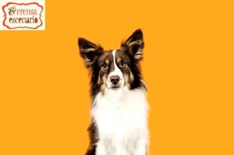 animal planet - dog tv - semana felicida0007