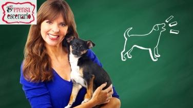 animal planet - dog tv - semana felicida0011