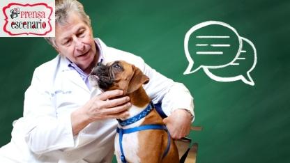 animal planet - dog tv - semana felicida0013