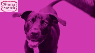 animal planet - dog tv - semana felicida0019