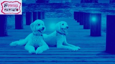 animal planet - dog tv - semana felicida0020
