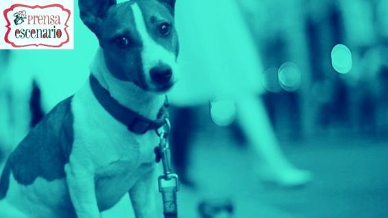 animal planet - dog tv - semana felicida0021