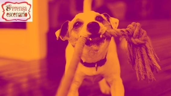 animal planet - dog tv - semana felicida0023