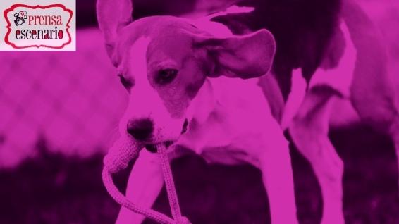animal planet - dog tv - semana felicida0024