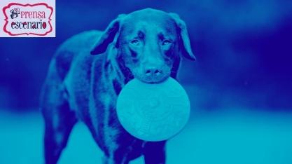 animal planet - dog tv - semana felicida0025